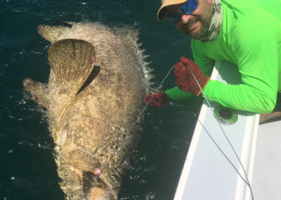 Goliath Grouper Fall