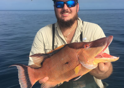Hogfish - Offshore