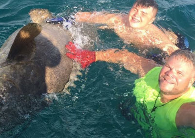 Swimming with Goliath Grouper