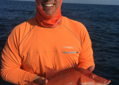 Winter Hogfish