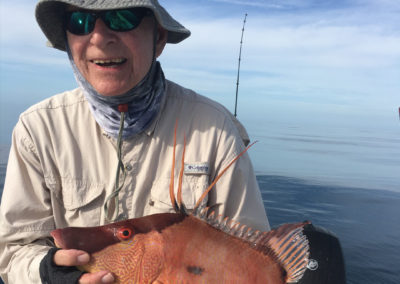 Offshore Winter Hogfish