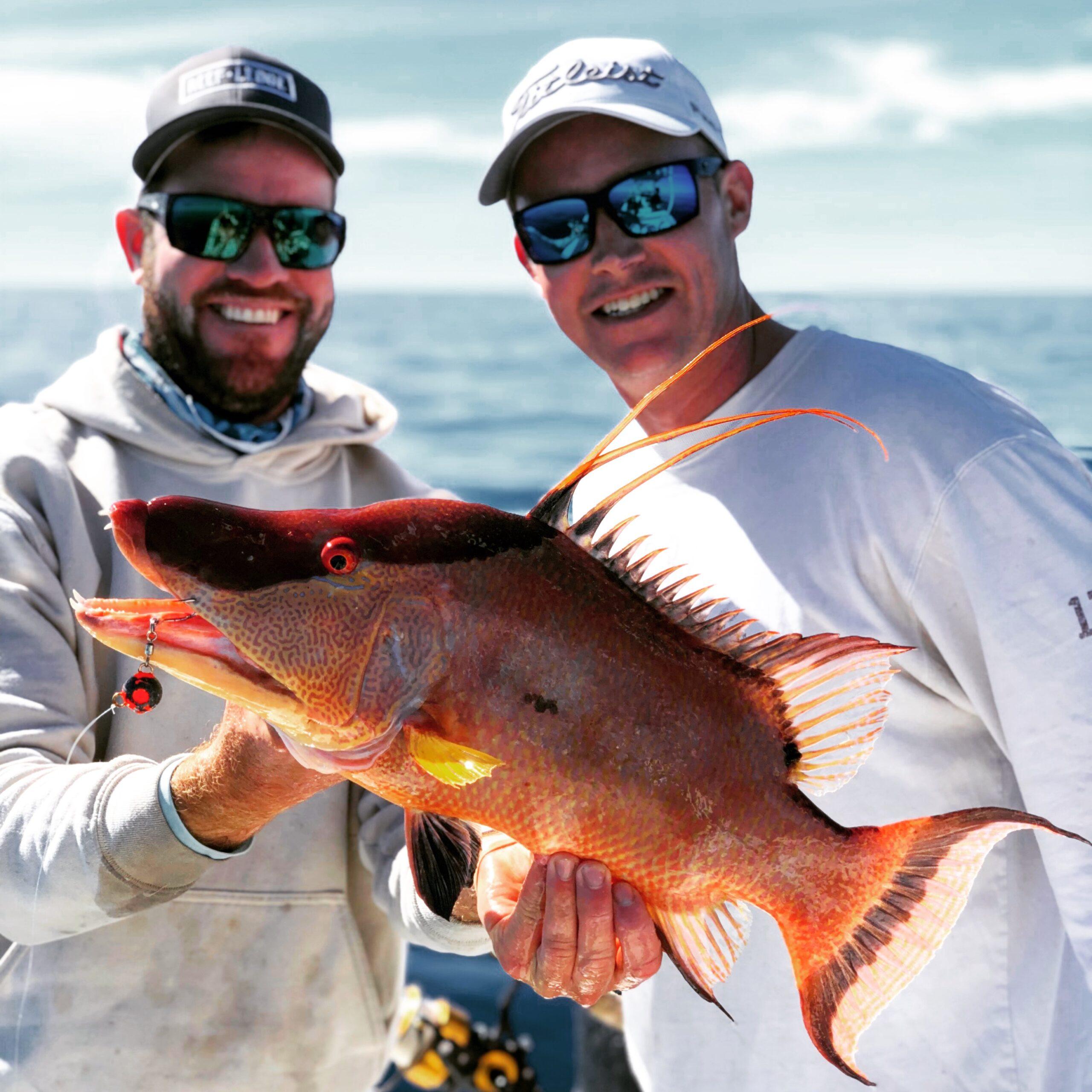 big_hogfish