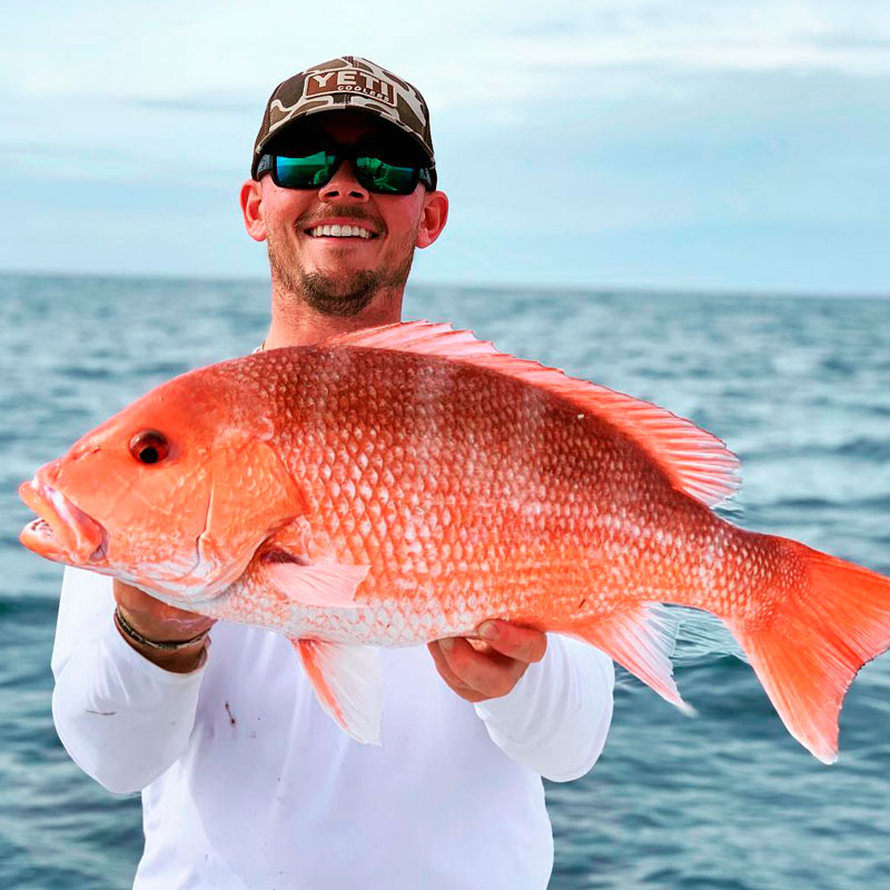 Red Snapper (Lutjanus campechanus)