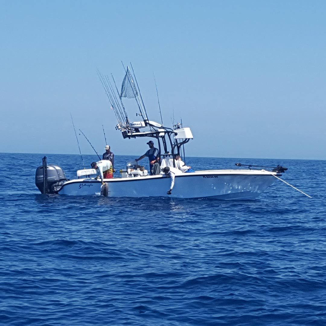 Action Profile of Yellowfin